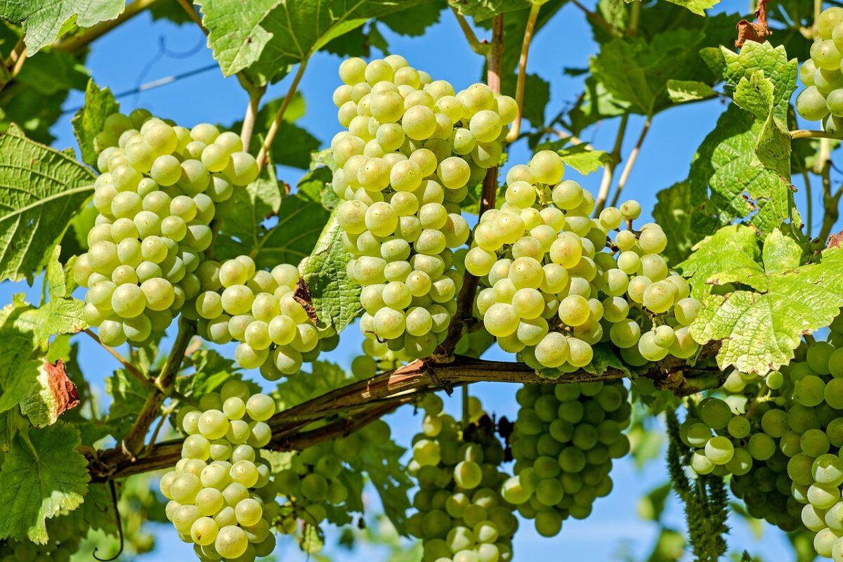 Wine festival in Tokaj
